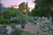 The sun sets behind desert plants on the UNLV campus.